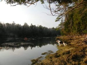 beagle viewing McCarty Cove waters