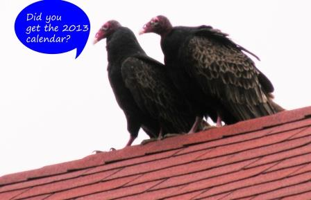 two turkey vultures on a rooftop