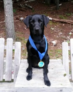 Casco with Speed Retrieve blue ribbon