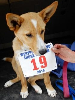dog with race number